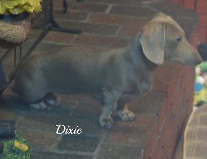 Dixie_2_edited.jpg