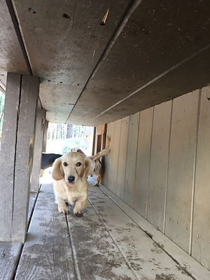 Cameo Running on Deck.JPG