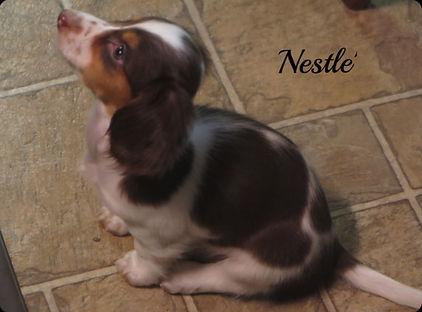 Nestle_4_edited.jpg