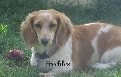 Freckles_edited.jpg