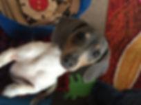 Snoopy Sitting Pretty.JPG