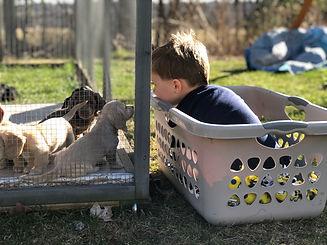 Boy Talking to Pups.jpg