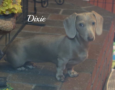 Dixie_1_edited.jpg