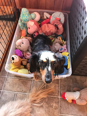 Onyx in Toy Box.jpeg