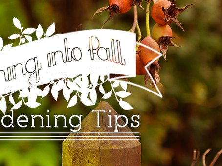 Transitioning into Fall- Gardening Tips