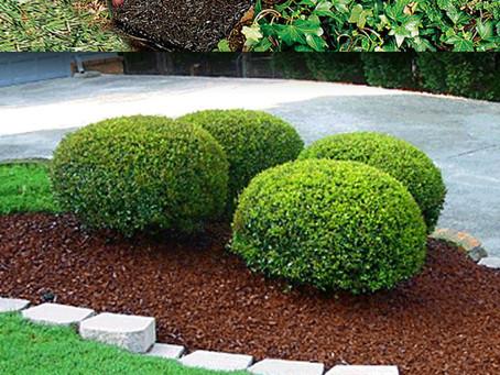 Great Gardening Hacks From Pinterest