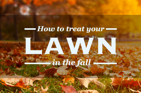 How to Treat Your Lawn in the Fall