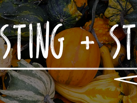 Harvesting Pumpkins and Storing Seeds
