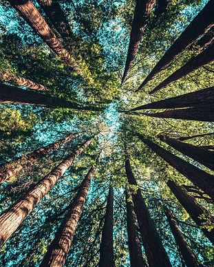 Cerf Vert Groupement forestier citoyen écologique