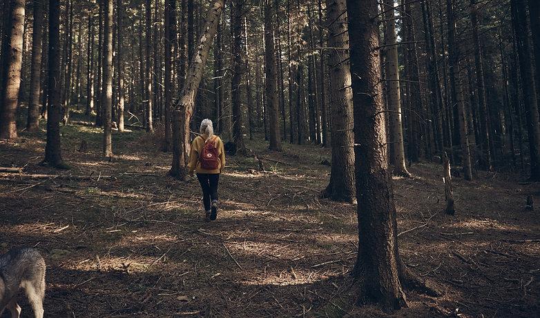 Investissement responsable forêt en groupement forestier