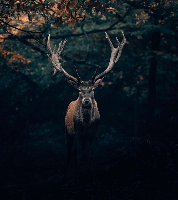 Groupement forestier approche participative citoyenne biodiversité