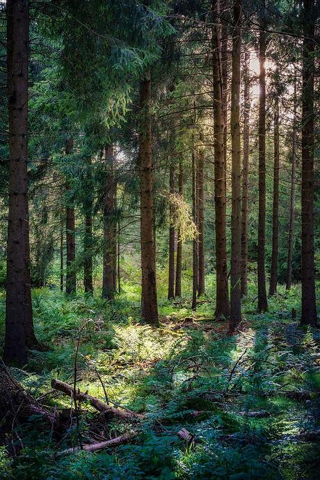 forêt gérée durablement sylviculture douce