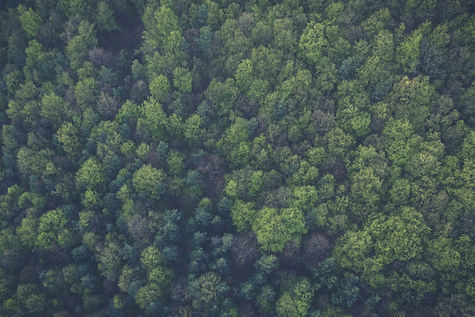 bird-s-eye-view-nature-forest-trees-1133