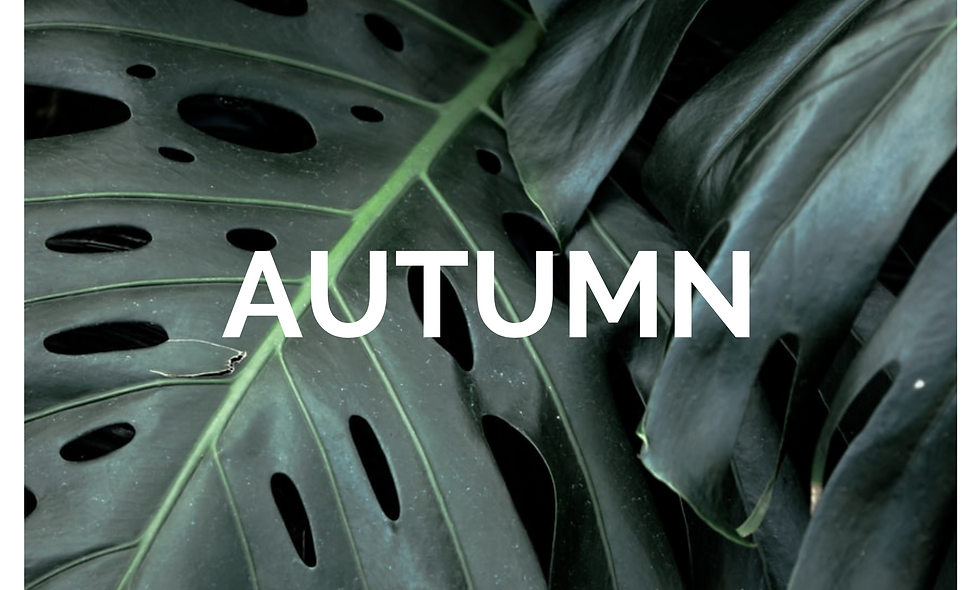 AUTUMN CLEANSE - NEW