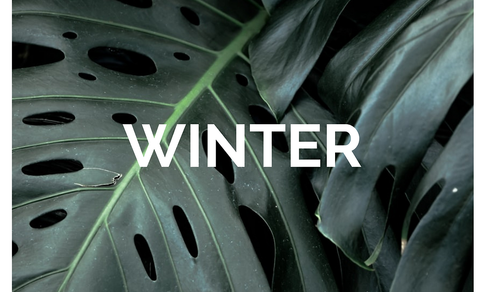 WINTER CLEANSE - NEW