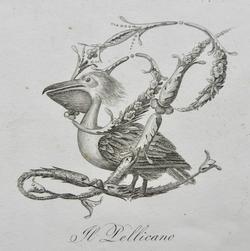 Avian Alphabet