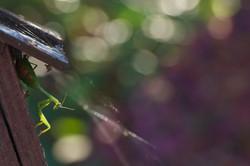 the mantis.jpg