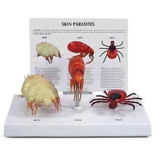 9095-Skin-Parasites.jpg