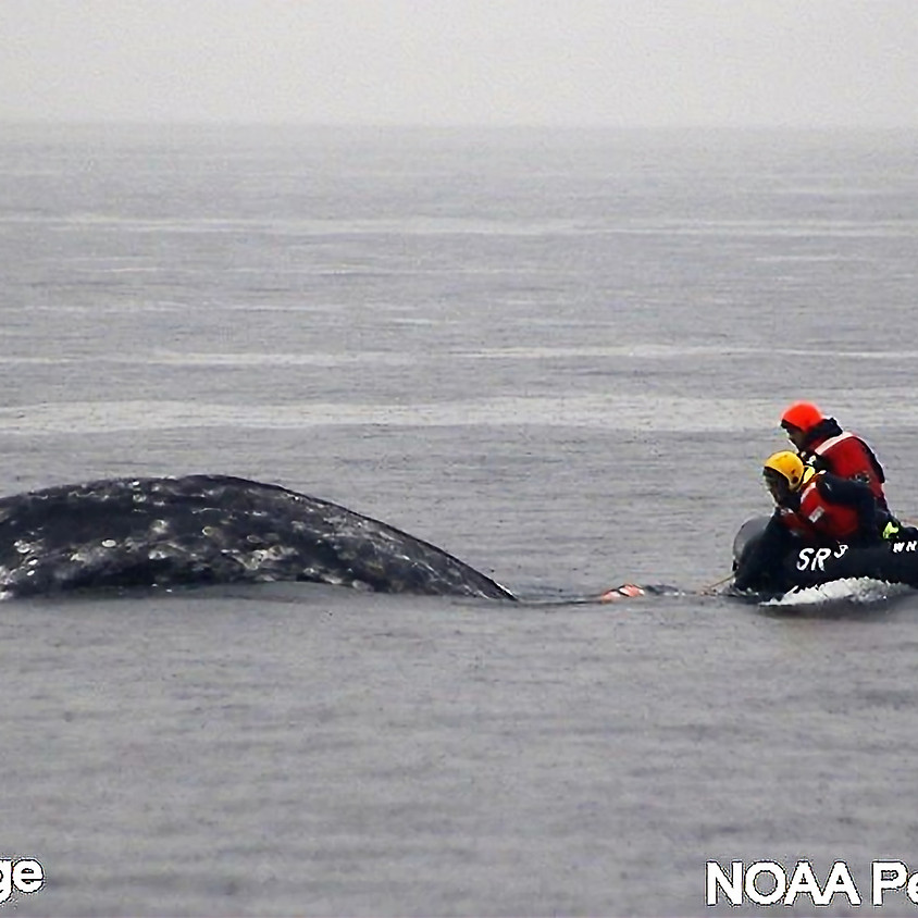 April Dinner Meeting - Program - Pacific Northwest Large Whale Entanglement Response Network