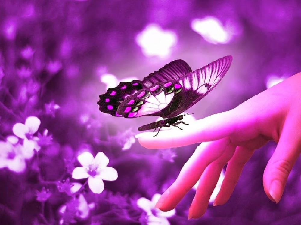 butterflies-girl-butterfly-resolution-free-twitter-colorful-beautiful-jpg-461523.jpg