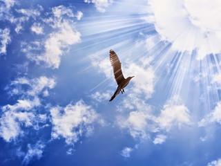 The Little Bird Can Fly: A Short Story