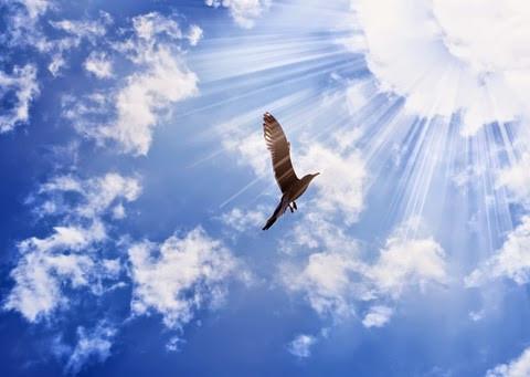 bird into sun.jpg