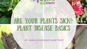 ¿Tus plantas están enfermas? Conceptos básicos sobre enfermedades de las plantas