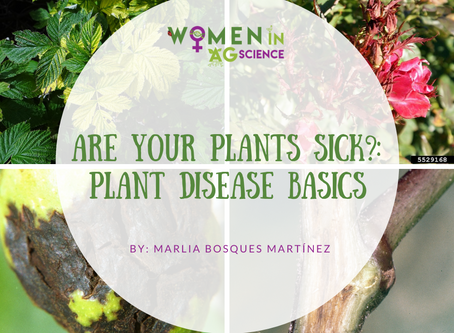 Are your plants sick? Plant Disease Basics