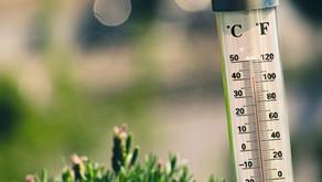 ¡Cultivemos un jardín! Parte 1: La temperatura, factor clave para el cultivo de nuestros alimentos