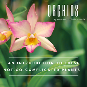 Orchids .png