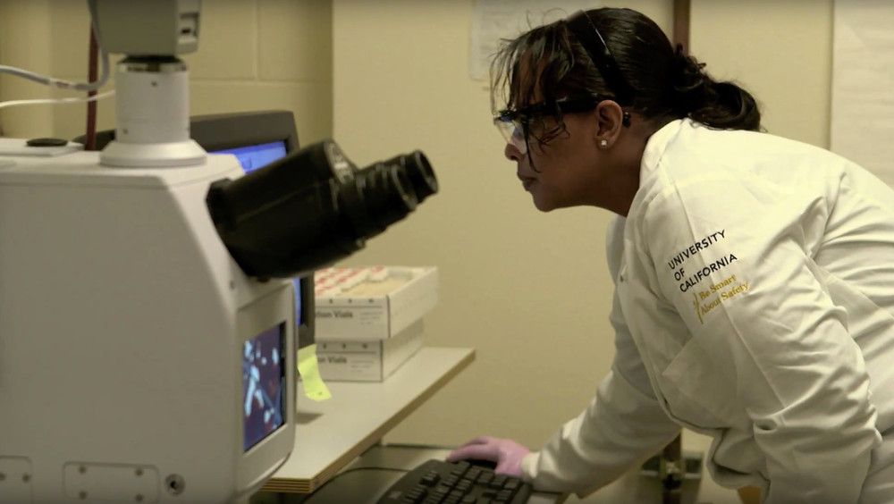 Dr. AA Berhe doing laboratory work using a computer to look at data.