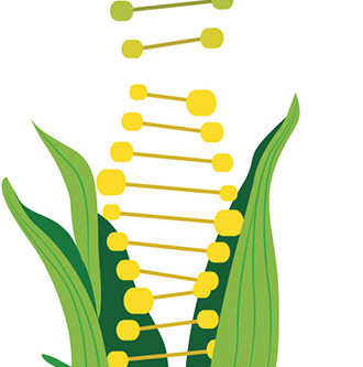 Fake, Fact or What? Evaluating What We Know About GMOs