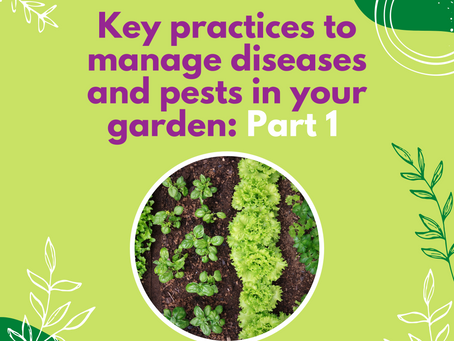 Key practices to manage diseases and pests in your garden: Part 1