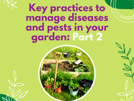 Key practices to manage diseases and pests in your garden: Part 2