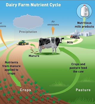 Dairy-Farm-Nutrient-Cycle_edited.jpg