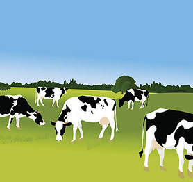 cows grazing.png