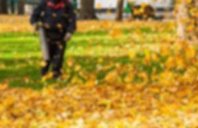 leaf-removal_edited.jpg