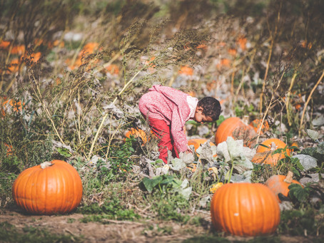 Check out the Pumpkins Fields
