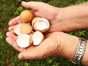 How to use Eggshells in the Container Garden as fertiliser