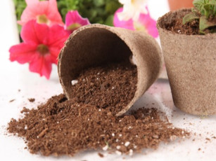 What is peat moss and peat moss alternatives?