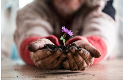 A girl holding a clump of soil in her hands with a purple flower in it.