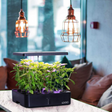 4 Best Indoor Hydroponics Systems