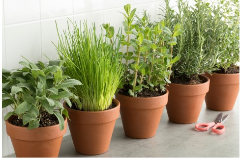 Five plants in terracotta plant pots with chives, sage, oregano, thyme and rosemary