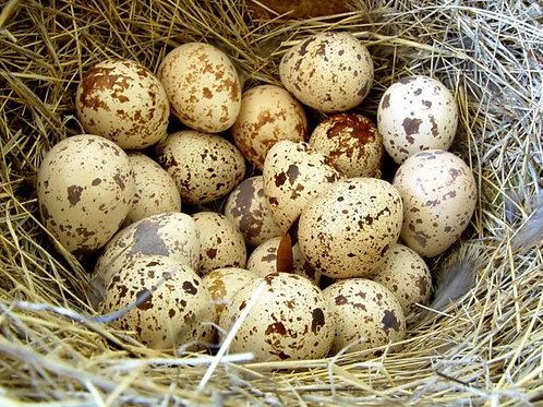 Яйцо перепелиное лоток (20шт)