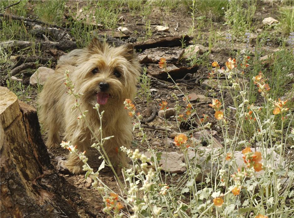 Kristi Kay hiking
