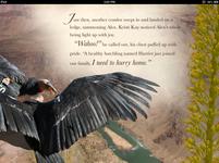 Two California Condors.PNG