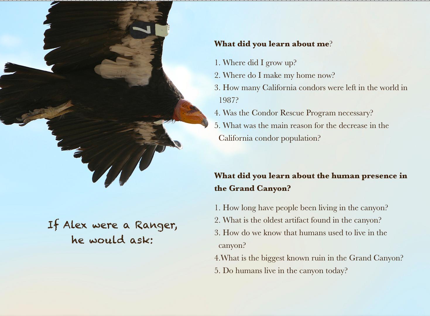 Condors questions.png