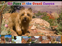 My Paws at the Grand Canyon young children book .JPG
