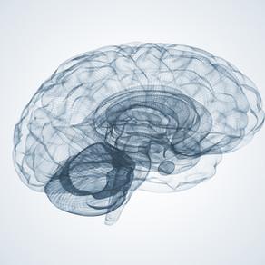 Chiropractic Adjustments May Improve Brain Function