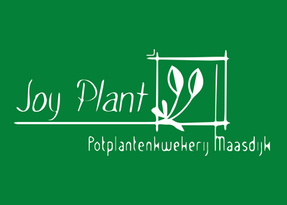 Decorum_witgroen_Joy plant.png